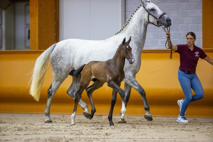 Pegasus (Berlin x Corland)